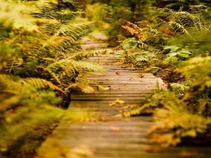 За папоротником нужно ухаживать и осенью - убирать засохшие листья