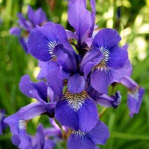 Чтобы вырастить здоровый цветок, необходимо хорошо разбираться в болезнях и знать, как помочь при заболевании