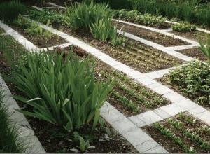 К растениям удобно подходить по дорожкам из плитки