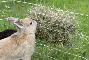 Кроликам удобно брать корм из сетчатого короба