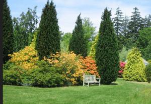 Ландшафтный дизайн с деревьями и кустарниками