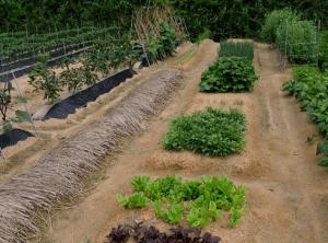 Традиционный ухоженный огород