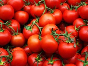 Первый урожай помидор можно собрать уже через 2,5 месяца