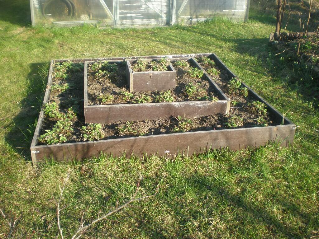 Как правильно сделать грядки на огороде: полезные советы