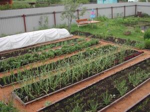 Как правильно делать грядки на огороде для моркови и лука 83