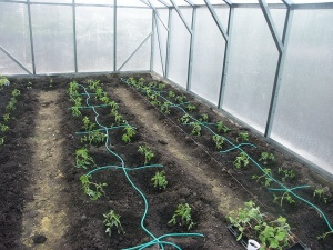 С помощью такого полива можно легко контролировать влажность почвы