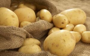 Как правильно вырастить картофель: основные нюансы
