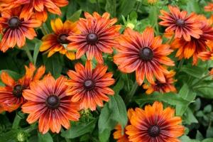 Борьба с вредителями садовых цветов
