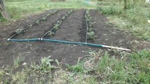 С помощью капельной системы полива можно хорошо производить уход за растениями