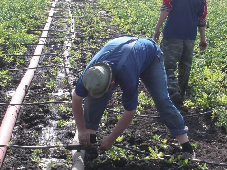 С помощью капельного полива садовод может сэкономить много воды