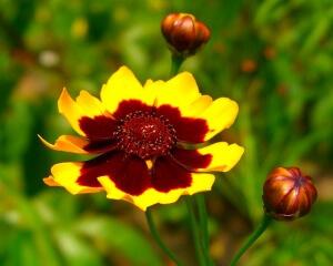 Для удобрения растения подойдут минеральные удобрения
