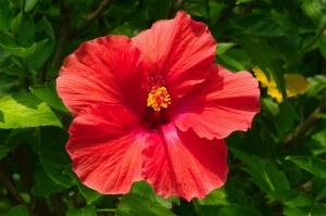 В летний и весенний период удобряйте растение раз в месяц