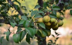 Срезанное растение лучше всего хранить при низких температурах