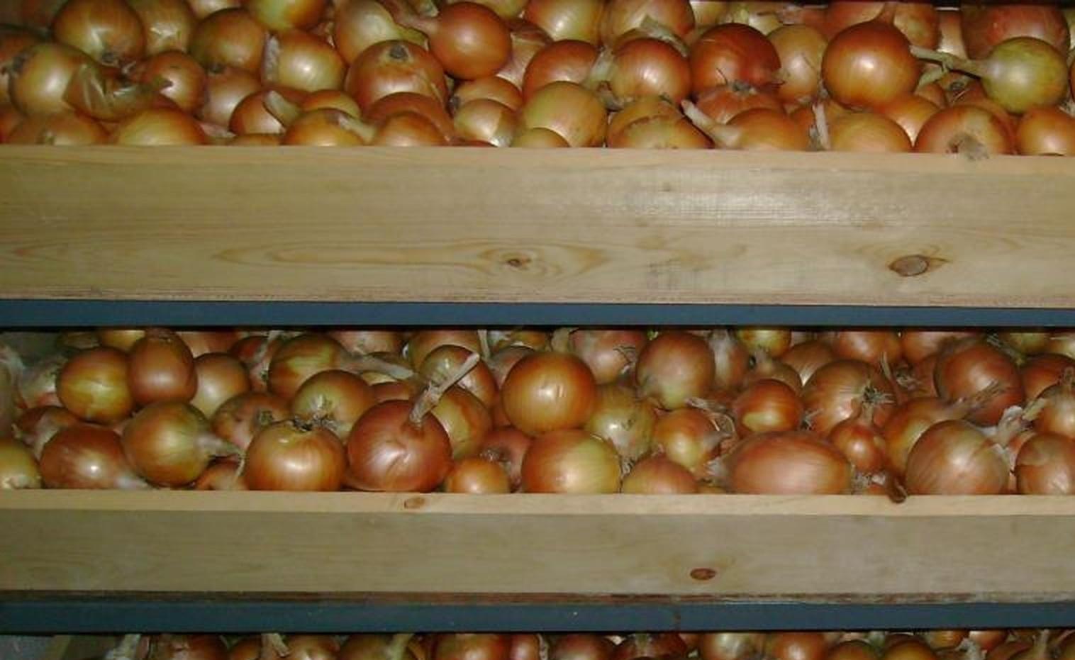 Как подготовить лук к хранению в домашних условиях Сад и огород 87