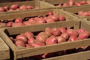 Ящики с картофелем хранятся в месте с хорошей вентиляцией