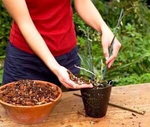 Tshhatelno-podbirajte-pochvu-dlya-orhidei