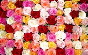 Розы очень часто подвергаются химической обработке