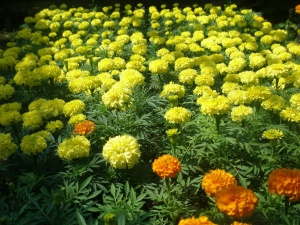 Обычно при помощи низкорослых растений можно создать ковер