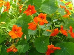 Некоторые растения требуют опору