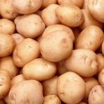 Посадка и уход за картофелем: секреты успешного выращивания растения