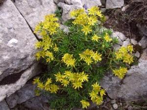 Тенелюбивые садовые цветы: какие выбрать?