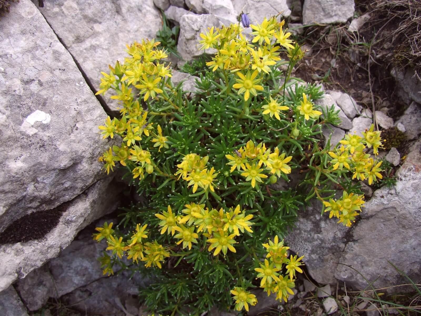 Тенелюбивые садовые цветы — какие выбрать?