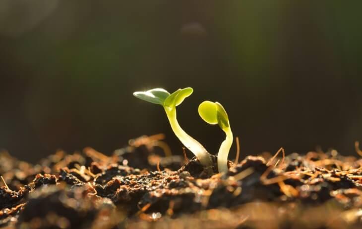 Некоторые растения могут расти в почвах с низкой кислотностью