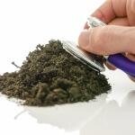 Как проверить кислотность почвы: способы ее повышения и понижения