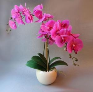 Если уход является недостаточным, то растение могут поразить вредители