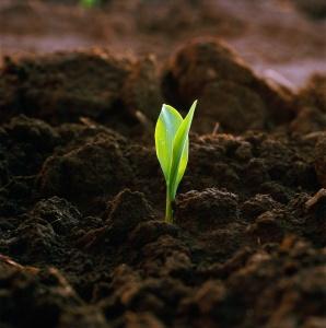 Удобрение может помочь с низкой кислотностью