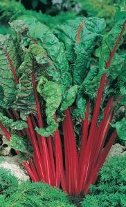 Свекла богата витаминами, особенно лиственная