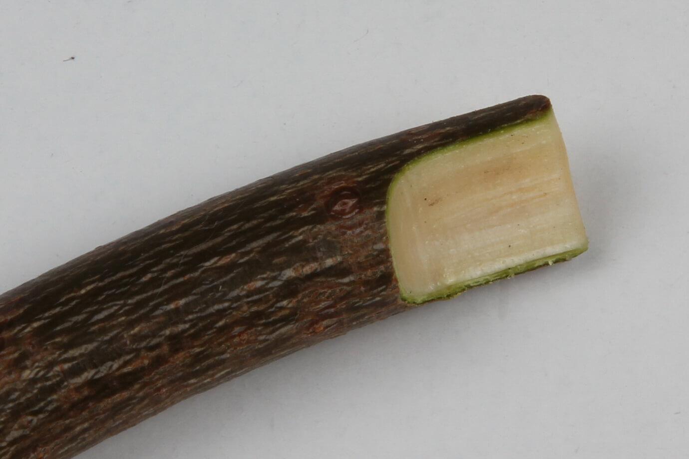 Секатор для прививки деревьев — как выбрать удобный и функциональный инструмент