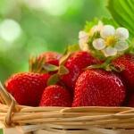 Подкормка клубники весной: правильный уход и секреты хорошего урожая