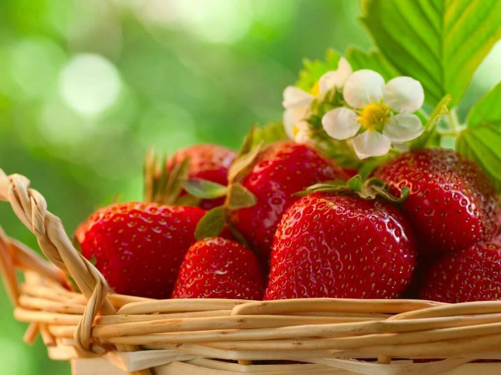 Подкормка клубники весной — правильный уход и секреты хорошего урожая