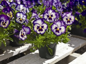 Сеять семена лучше всего в марте