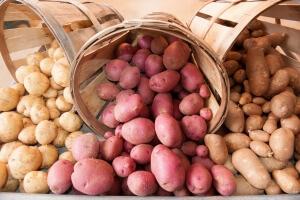 На балконе или лоджии картофель следует закладывать в специально изготовленный для этих целей герметичный ящик
