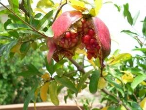 Не следует сразу же ждать появления плодов