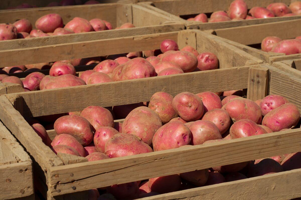 Хранение картофеля на балконе схема