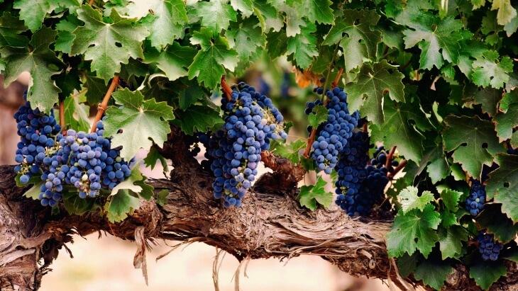 Весной после проверки растения на жизнеспособность можно приступить к непосредственному проращиванию