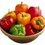 Особенности выращивания болгарского перца в теплице