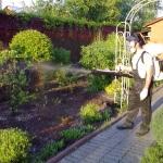 Когда и чем опрыскивать плодовые деревья: советы садоводам