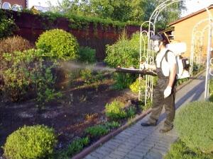 Существует большое количество средств, которыми можно обрабатывать деревья в саду