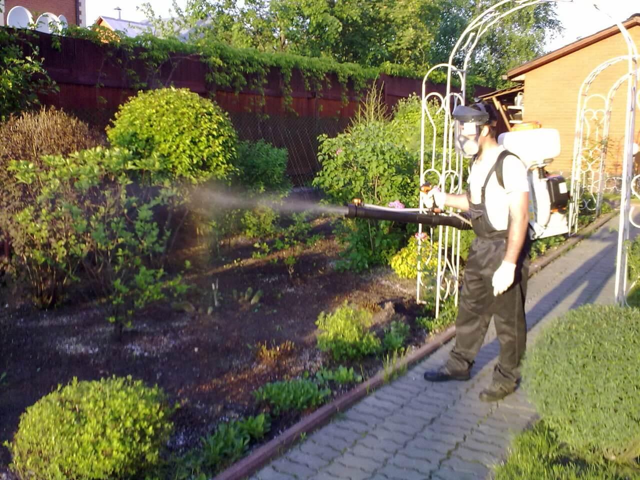 Когда и чем опрыскивать плодовые деревья - советы садоводам