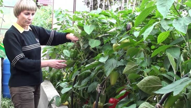 Отбор семян перед посевом позволяет исключить слабые семена, которые не дадут всходов