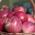 Яблоки «Слава победителю» — сорт проверенный временем