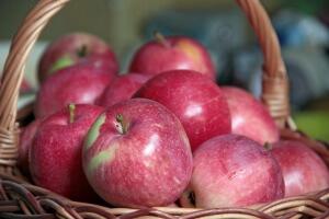 Яблони имеют размашистые кроны пирамидальной формы