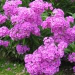 Как добиться красивой посадки цветов на даче: советы и рекомендации