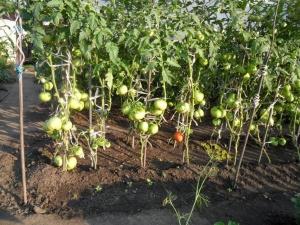 Емкости с растениями необходимо располагать чуть выше уровня грунта