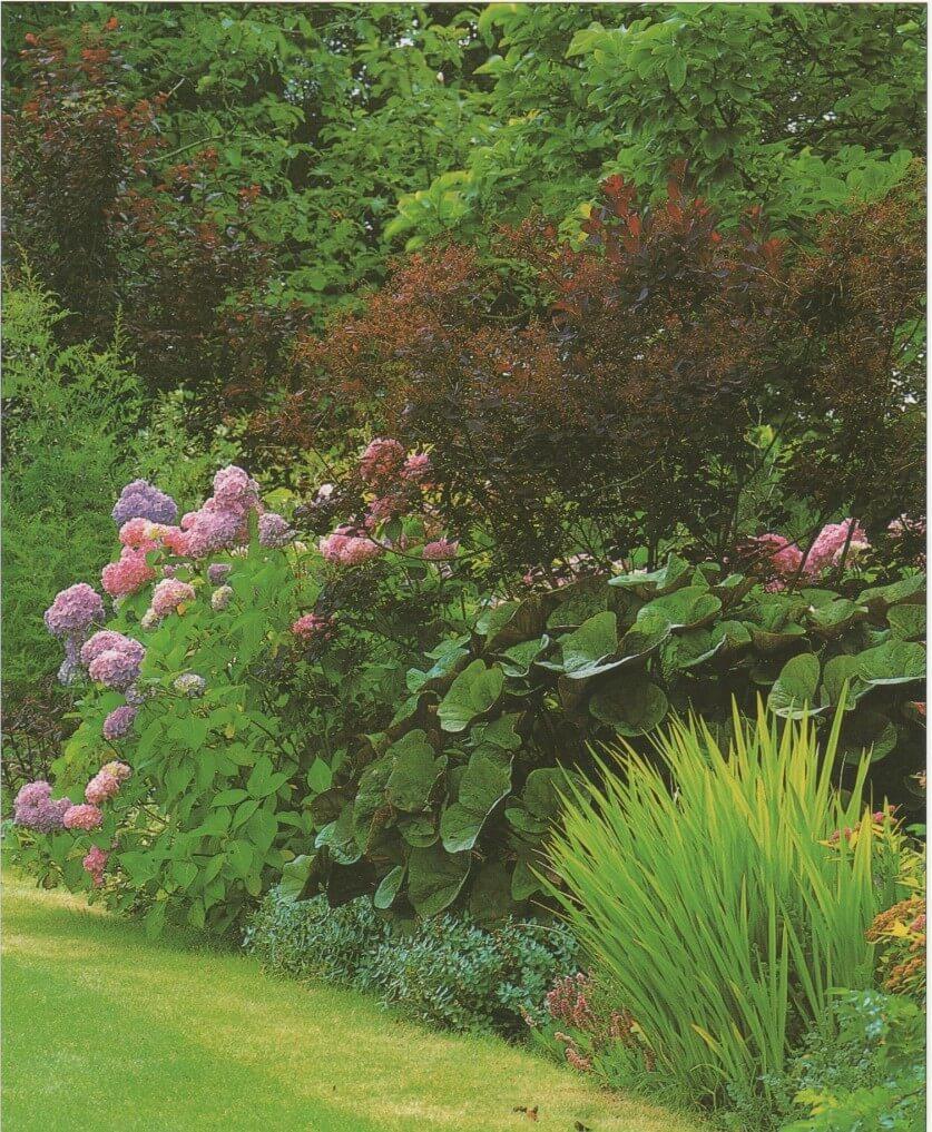 Выращивание теневыносливых растений для сада поможет создать уютный уголок