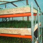 Гидропонная установка для выращивания зелени: нетрадиционное земледелие